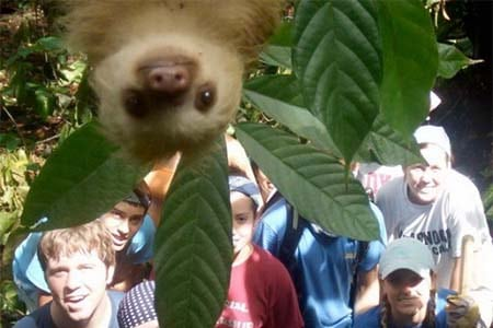sloth-photobomb